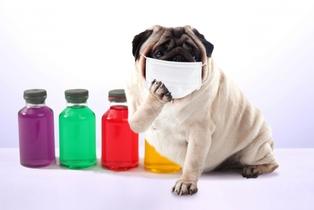 7/22(日)1日でわかる!飼主と愛犬の不調を整えるハーブ療法開催決定!